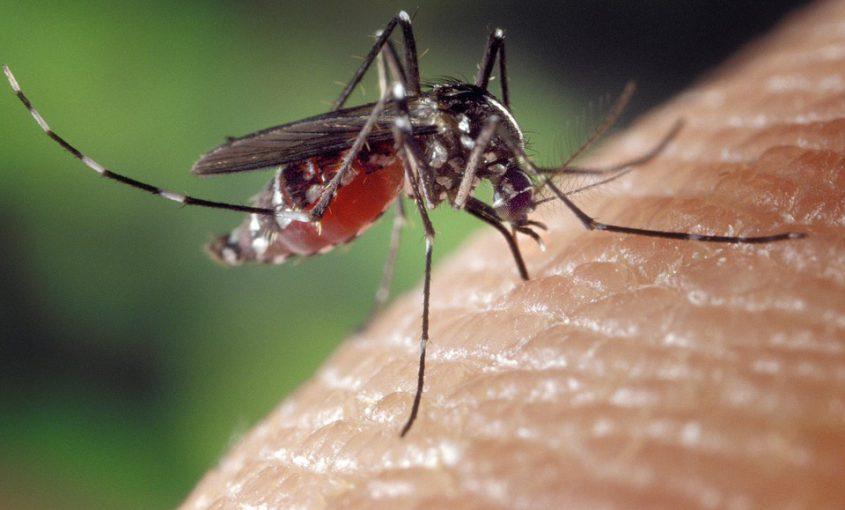 zika-mosquito-flu