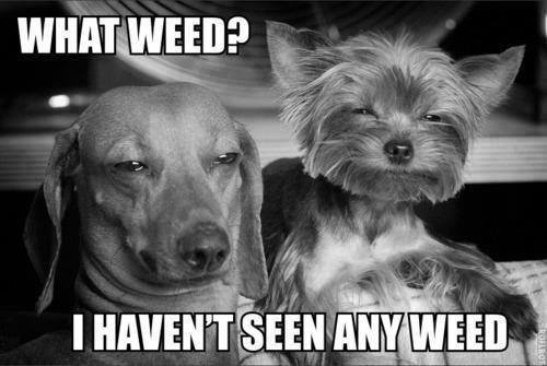 what weed?